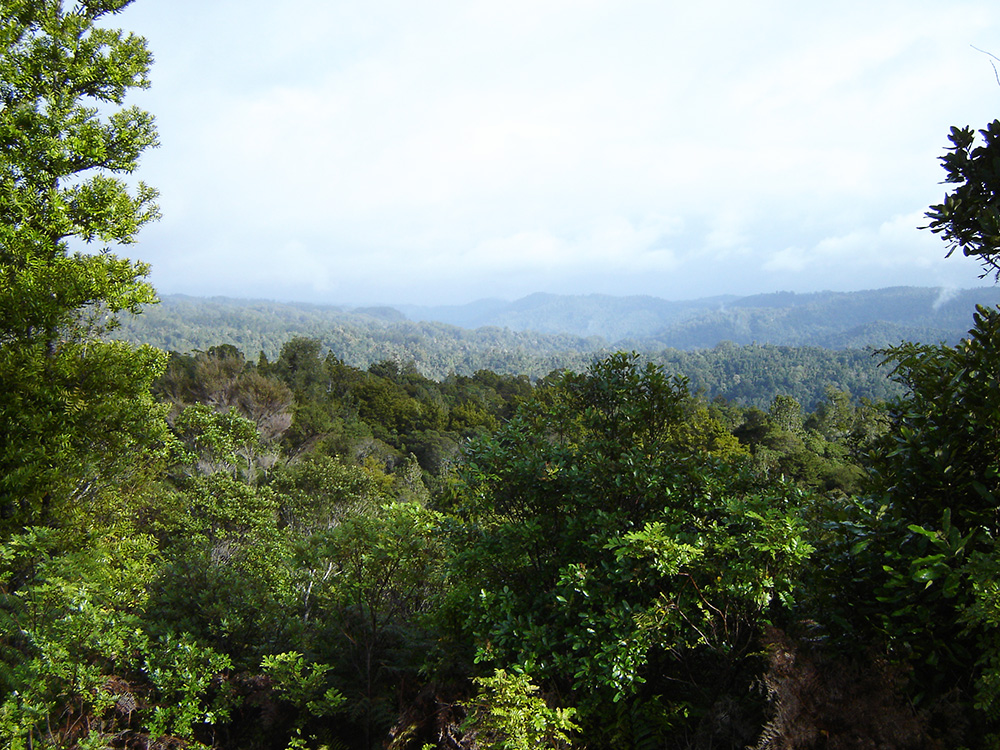 Waipapa River valley, Puketi Forest
