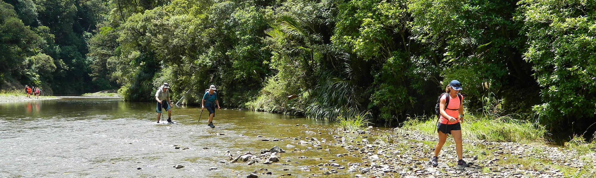 Waipapa River walk, Puketi Forest