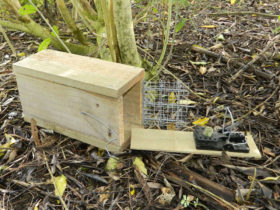 Snap-E rat trap and box with pig-proof door