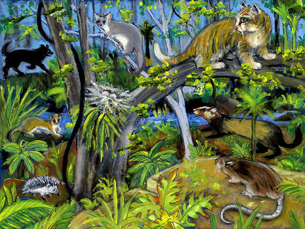 Introduced predators - illustration by Cecilia Russell