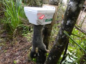 Trapinator possum trap