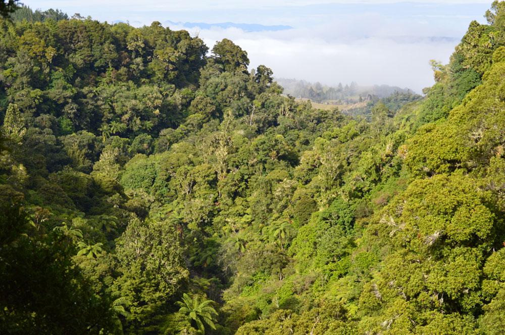 Waihoanga Gorge, Puketi Forest